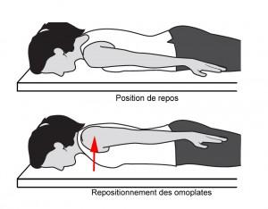 Les omoplates se rapprochent et s'abaissent vers les pieds